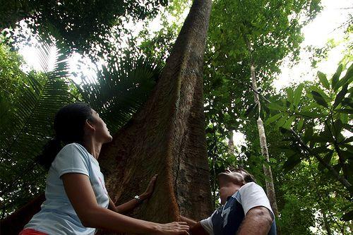 Endau Rompin National Park, Johor, Malaysia