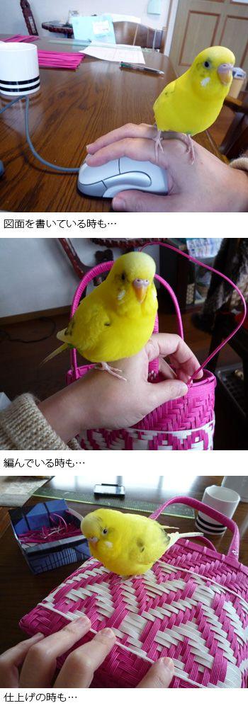 バッグ : Blog Kamihimo