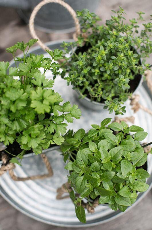 target drink tray with potted herbs growing sfgirlbybay