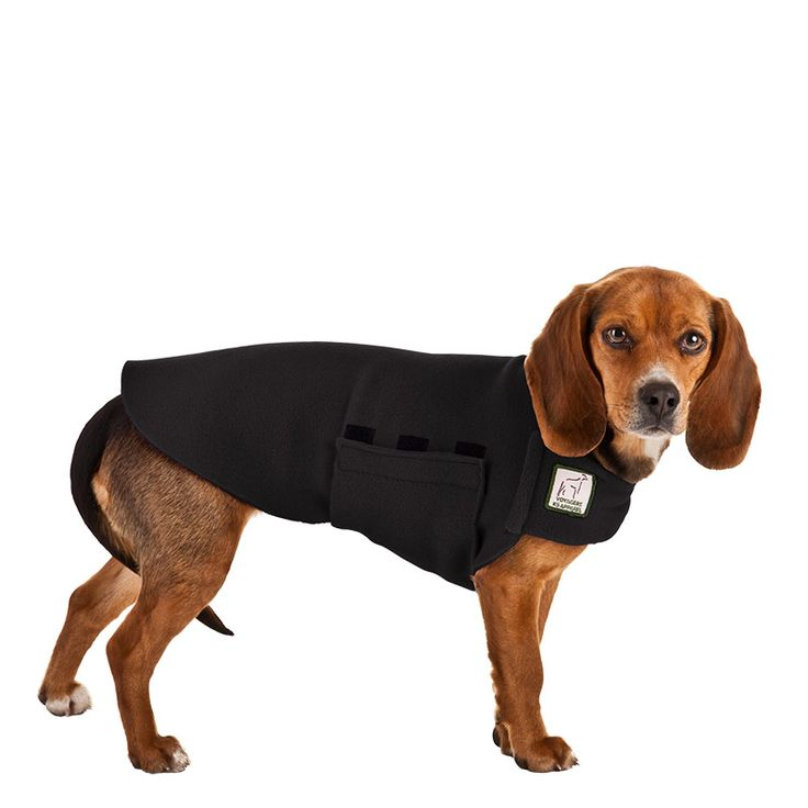 Black Beagle Tummy Warmer, great for warmth, anxiety and laying with our dog rain coat. High performance material. Made in the USA.