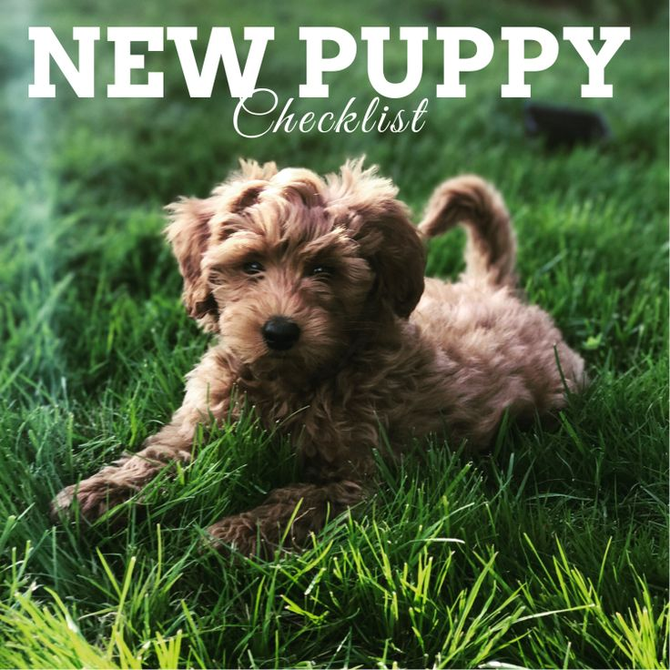 New Puppy Check List