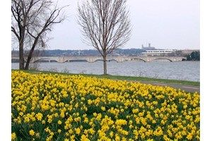 Lady Bird Johnson Park. Good picnic spot with tulips and daffodils in spring. On mt. vernon trail. can also park at columbia island marina. Good lace to watch fireworks! (Can bike or walk home.)