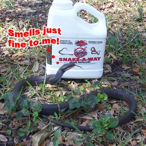 How to Keep Away Snakes....because I'm terrified of them!