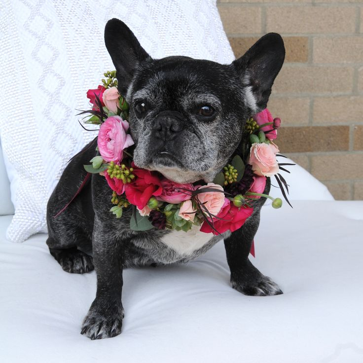 Floral wedding collar designed by Ann Strickland. Jetta Hafner loves coming to work at Hafner Florist! She makes the perfect model. The best Frenchie!