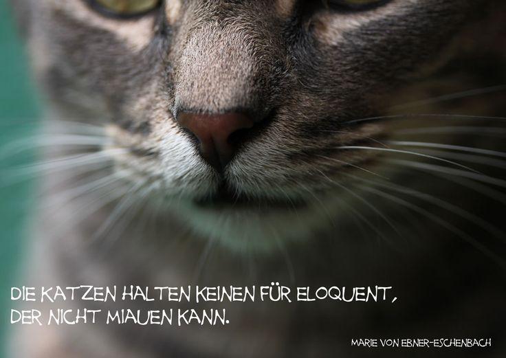 Die Katzen halten keinen für eloquent, der nicht miauen kann. #katzenzitate #marievonebnereschenbach