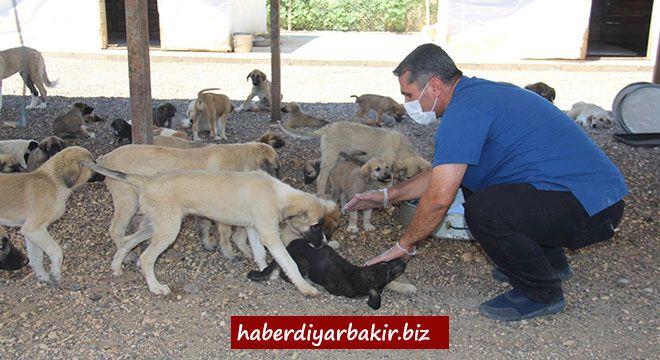 DİYARBAKIR- Bölgenin en büyük ve Türkiye 2'inci büyük köpek bakım evi olan Diyarbakır Büyükşehir Belediyesi  Sağlık İşleri Daire Başkanlığ...