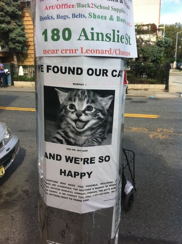 43 best Lost \ Found images on Pinterest Brooklyn, Celebrities - lost pet poster