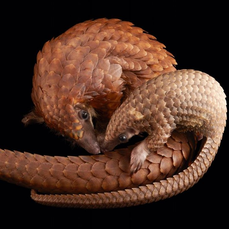 "384k Likes, 3,009 Comments - National Geographic (@natgeo) on Instagram: ""Images by @joelsartore 