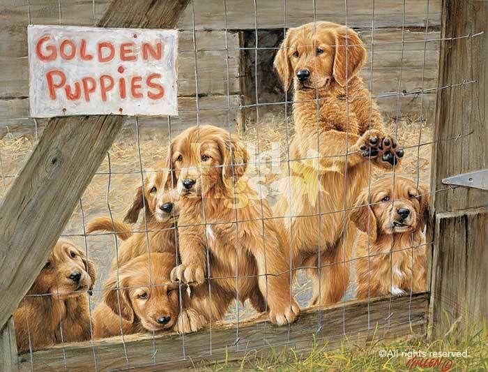 Golden Daze Golden Retriever Puppies Limited Edition Art Print