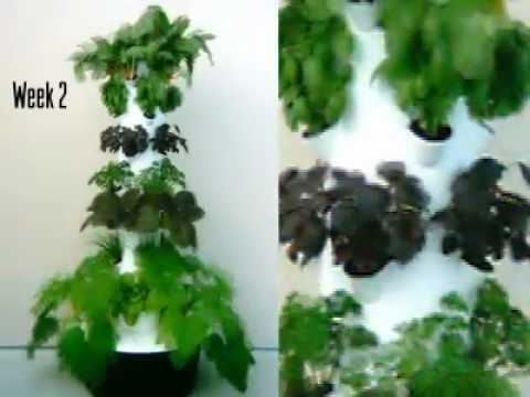 Tower Garden 4 Week Time Lapse Video We Re Eating Fruits And