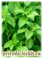 Зуб мудрости зеленый чай воспаление