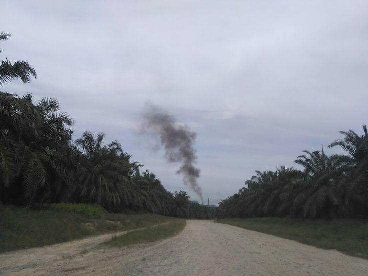 Lahan sawit menuju sebuah pabrik pengolahan minyak kelapa sawit/crude palm oil di Desa Muda Setia, Kecamatan Bandar Sei Kijang, Kabupaten Pelalawan, Provinsi Riau.