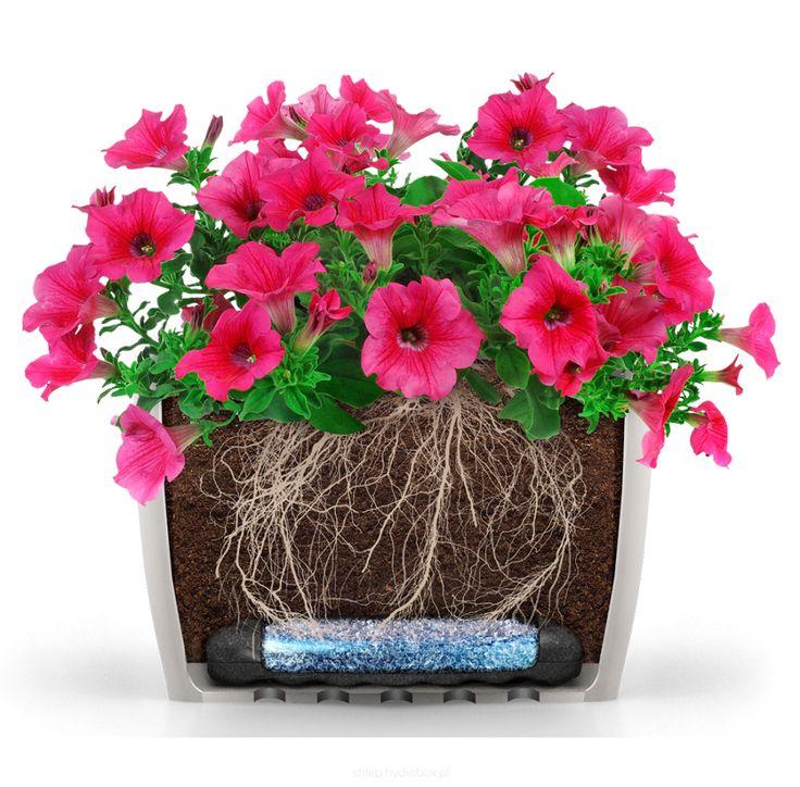 Mata idealna pod kwiaty balkonowe, wymagające ciągłej pielęgnacji, hodowane w podłużnych doniczkach i korytkach - Hydrobox mata 30x10 cm#hydrobox #hydroboxpl #kwiaty #flowers #flower #petunie #surfinie #kwiatybalkonowe #balkon #dekoracje #homedecor #watering #diy #ideas