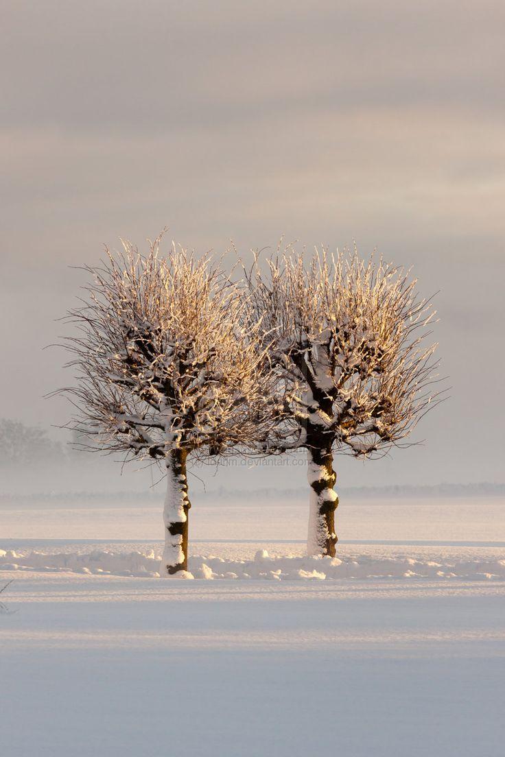 ✯ Two Trees in the Snow  www.SpaceWorksFengShui.com  #FengShui London UK