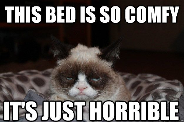 Funny Memes In Zulu : Best images about i love grumpy cat on pinterest