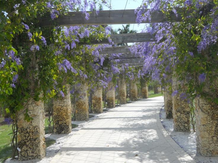 17 Meilleures Images Propos De Botanical Gardens Sur