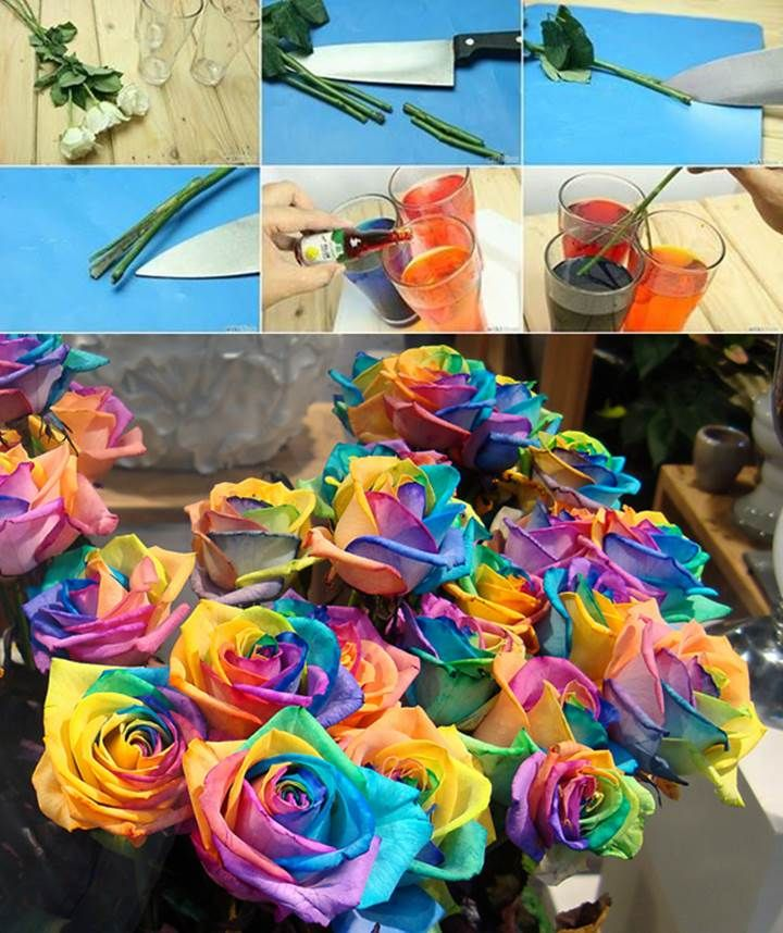 DIY Real Rainbow Roses
