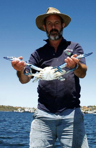Blue swimmer crab on the Swan River