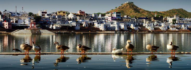 VIAGGIARE IN INDIA: DORMIRE, MANGIARE E ALTRO (PARTE III) Terzo ed ultimo capito di Informazioni pratiche per viaggiare in India su cosa vedere, alloggi, shopping, trasporti, ristoranti e mance una volta iniziato il viaggio. #India #viaggi #travelblogger #turismo #visitindia #vacanza #viaggiareinindia