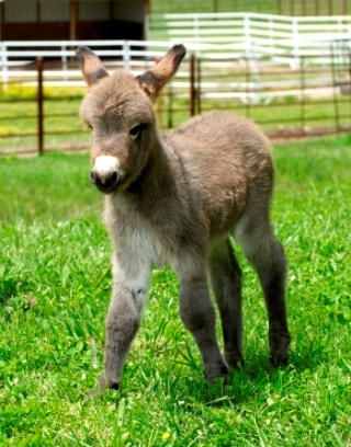 mini donkey will be our 2nd thing we get, this one is for John, he said this way, I will now have an ass! hehe