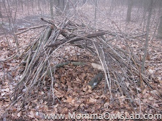 Build a stick fort and relate it to brush piles that animals use for shelter and rearing young.
