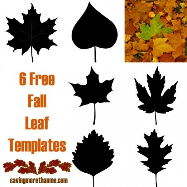 The 25+ best Fall leaf template ideas on Pinterest Leaf template - leaf template