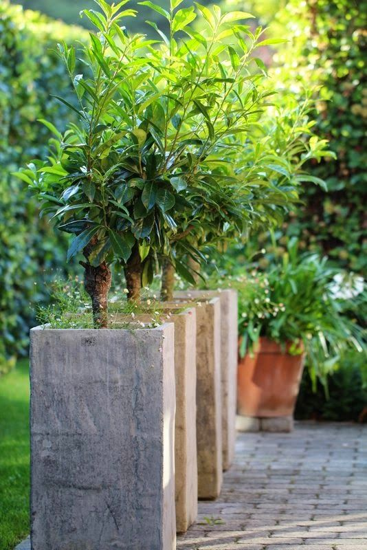359 best GARDEN CONTAINERS images on Pinterest Garden container