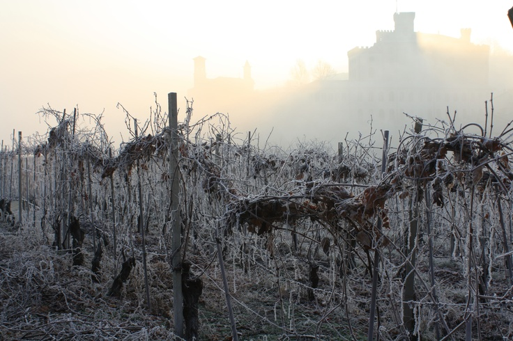 Barolo in the Piedmont. The nebbiolo grape takes its name from nebbia or fog in italian.