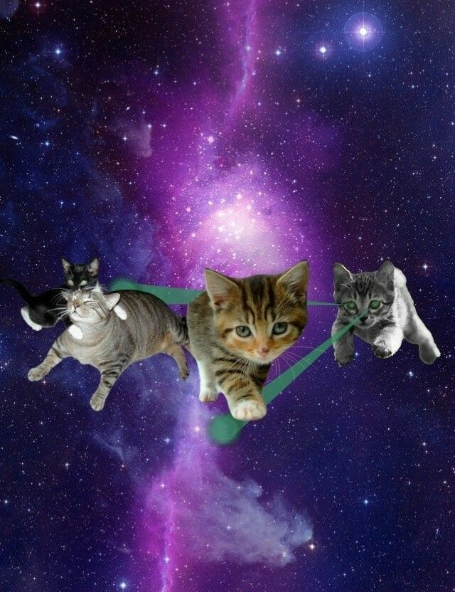 31 best images about Cats in the galaxy on Pinterest ...