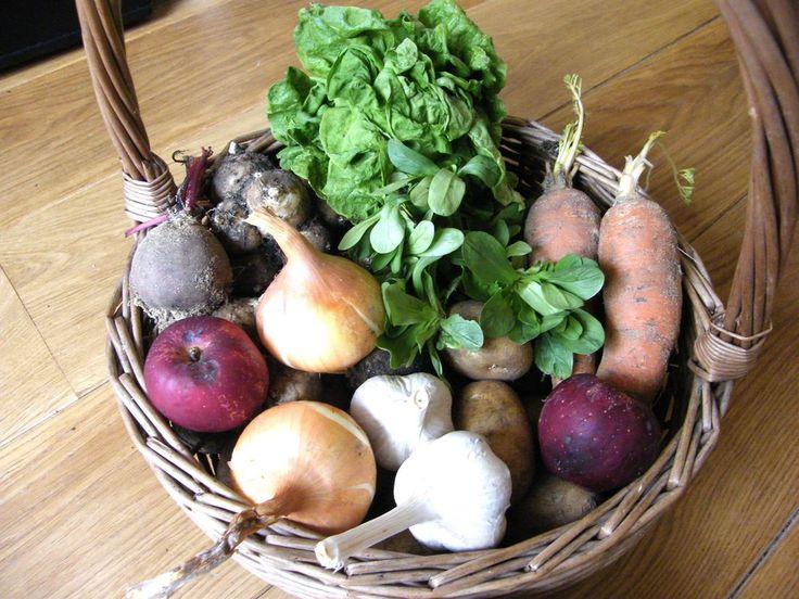 Na čem si nyní v dubnu pochutnáváme Máme uskladněné jablka, patisony, brambory, mrkev, cibuli, česnek, jíme poslední topinambury, protože již zahájili růst nových rostlin. Dojídáme...