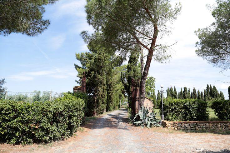 Ingresso del vialetto privato che conduce al podere #toscano I Doccioni. #peperita #piccante #natura #agricoltura #biologico #biodinamico