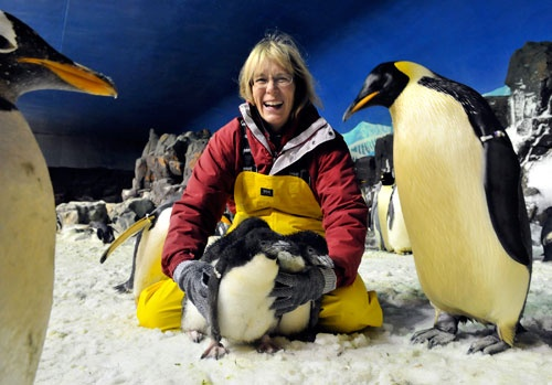 Go behind the scenes and get on the ice with those tuxedo-wearing birds as part of Sea World's Penguin Antarctic Adventure. #goldcoast #seaworld #penguin