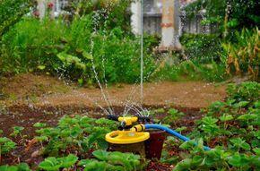 Há no comércio diversos sistemas de irrigação, tipos de equipamentos e muitas empresas especializadas, mas basicamente os tipos de irrigação controlada mais usados são o de aspersão e o de gotejamento. 1. Irrigação por aspers...