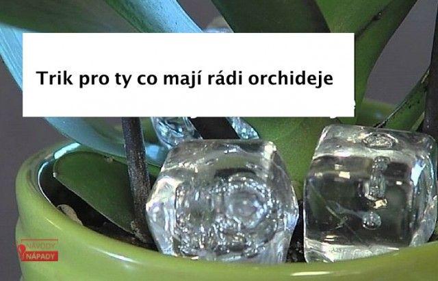trikorchideje