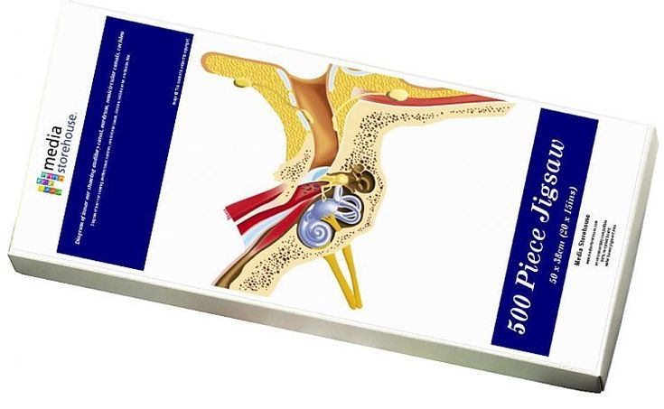 Print of Diagram of inner ear showing auditory canal ...