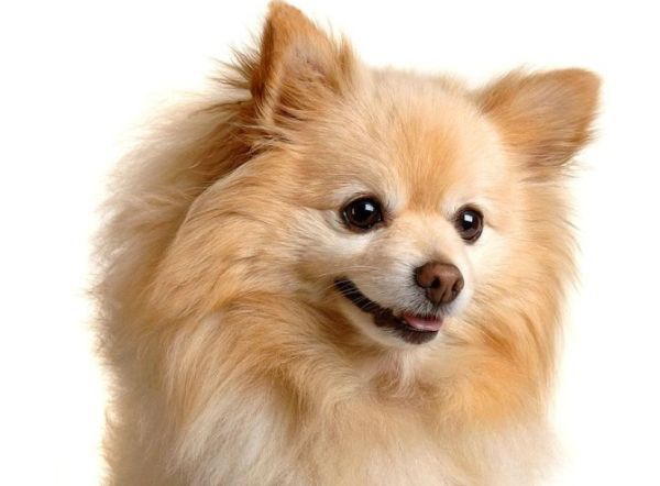 Cute Small Dog Breeds | small dogs are cute and so people may prefer them over big dogs as ...