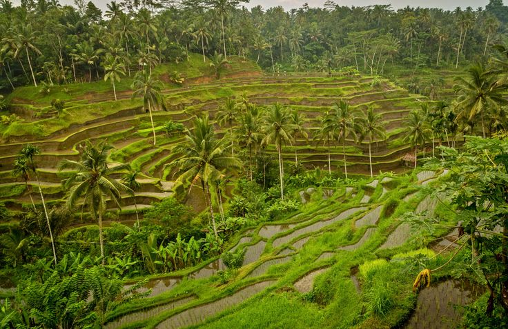 Bali…READ before you go. - http://allisontravels.com/what-to-know-before-you-go-to-bali/