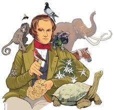 Una evolución biológica: una reconstrucción Darwinista -  Una defensa de les idees de Darwin. Com continuen sent vigents per entendren els procés evolutiu.