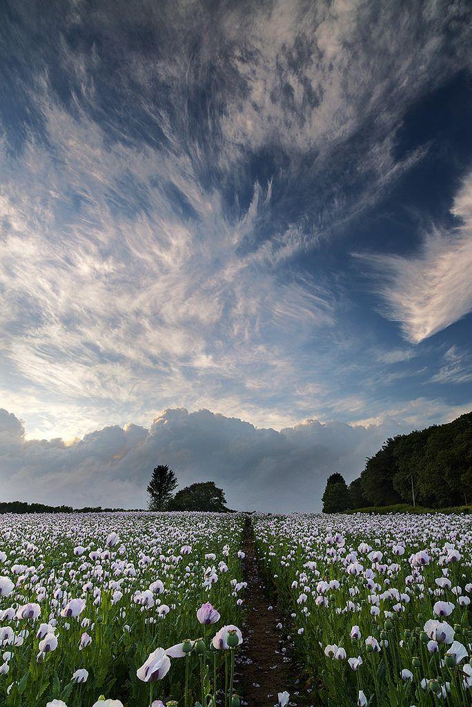 Dorset by peter spencer**