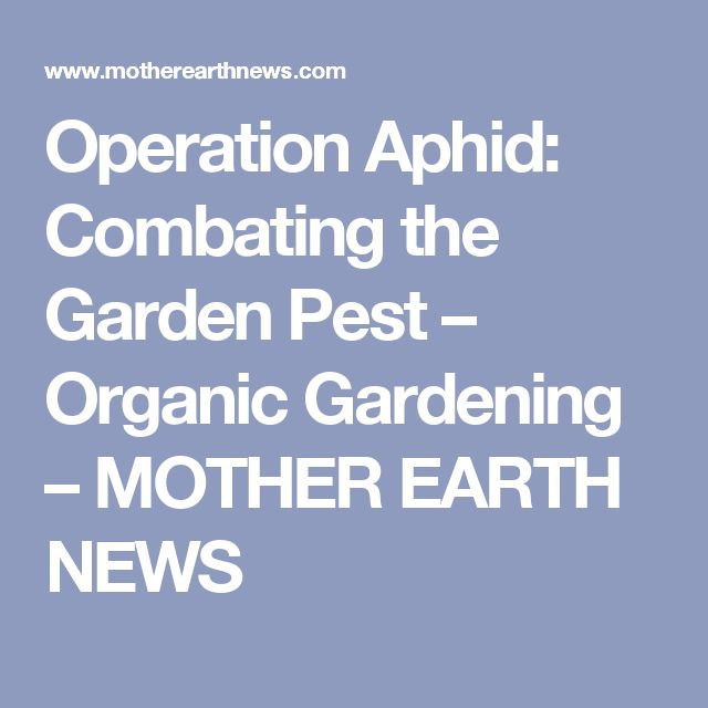 Operation Aphid: Combating the Garden Pest – Organic Gardening – MOTHER EARTH NEWS