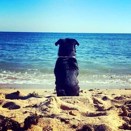 ¿Tienes dudas sobre si tu perro es feliz y se siente cómodo en el ambiente que le proporcionas? Aquí van algunas conductas de bienestar o confort. Toma nota...