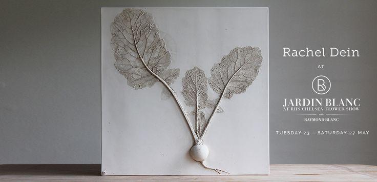 Rachel Dein – Plaster and Concrete Artist | Botanical art in plaster and concrete