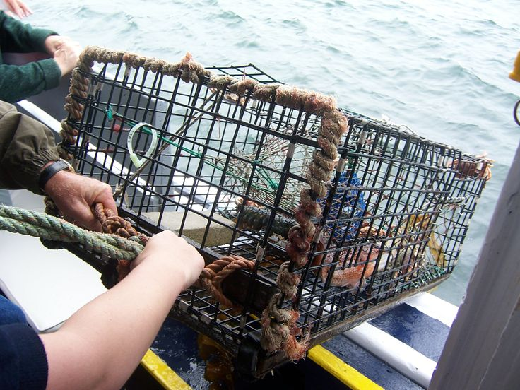 Pulling up a lobster trap on tour! Halifax, NS