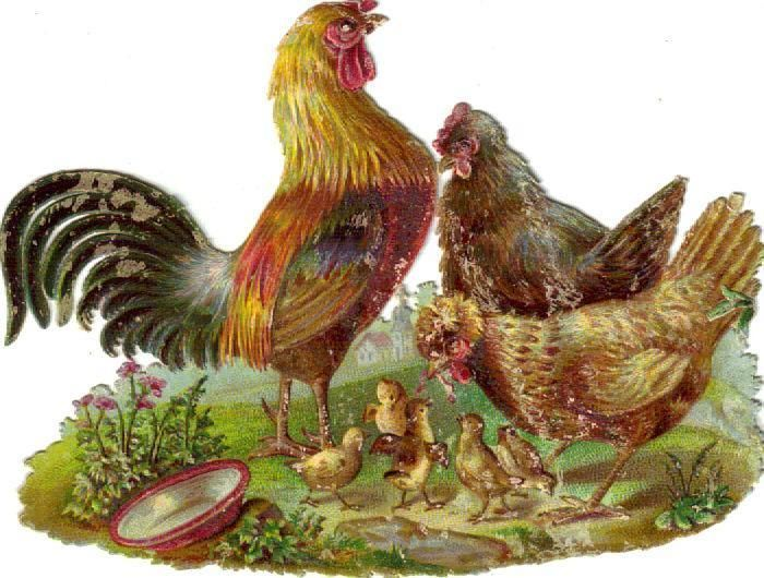 Victorian Die Cut Scrap Chicken Family c1880