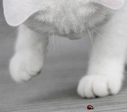 This looks so much like Lola... and she totally does this with spiders, flies, whatever makes its way into our house