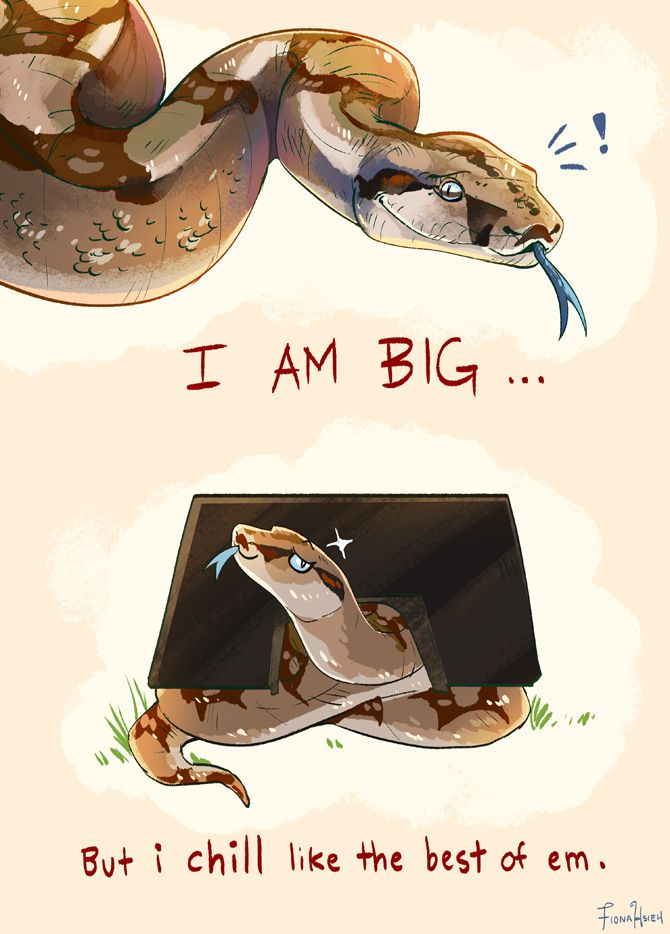 """fionahsieh: """" boa constrictors chill all the time """""""