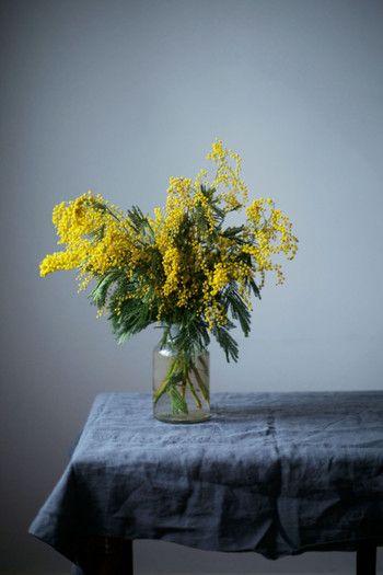 シンプルな花瓶にミモザだけを活けても存在感があってお部屋のアクセントに。