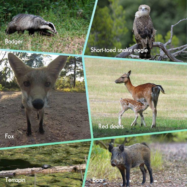 animals mountain esterel wildlife tourism