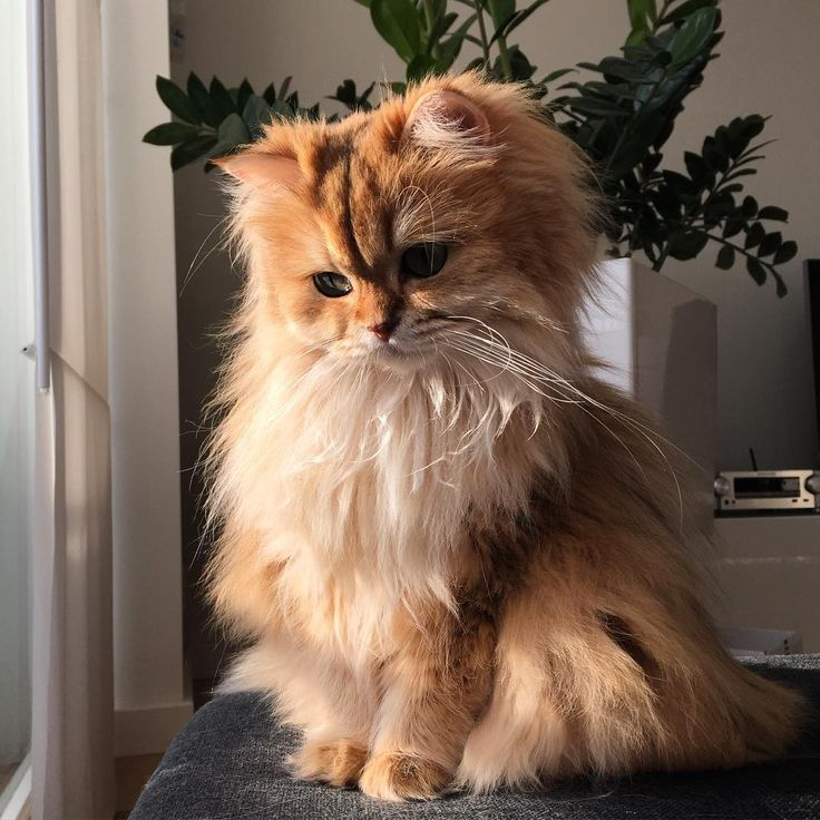 These cute kittens will warm your heart. Cats are fascinating friends. Cute Kittens, Cats And Kittens, Black Kittens, Derpy Cats, Cute Baby Animals, Animals And Pets, Funny Animals, Funny Cats, Pretty Cats