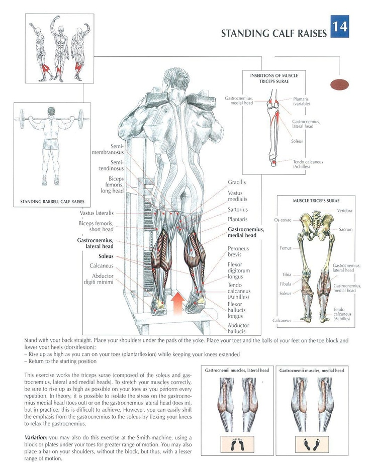 Standing Calf Raises ~ Repinned by Crossed Iron Fitness #fitness #workout #leg